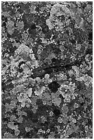 Lichen-covered rocks. Baxter State Park, Maine, USA ( black and white)