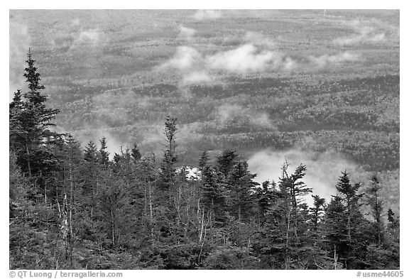 Ridge of conifers, with mixed forest and clouds below. Baxter State Park, Maine, USA (black and white)