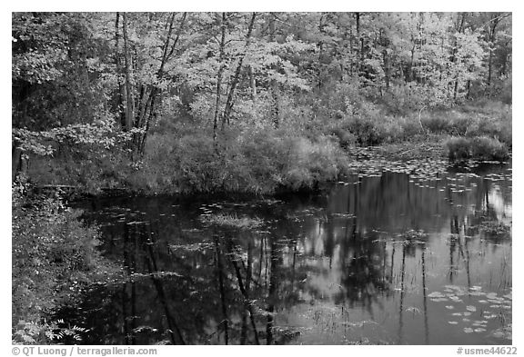 Pond surrounded by trees in fall colors. Maine, USA (black and white)