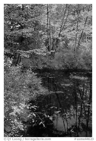 Trees in fall foliage next to pond. Maine, USA (black and white)