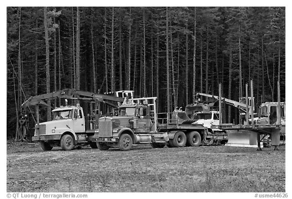 Forestry vehicles in a clearing. Maine, USA (black and white)