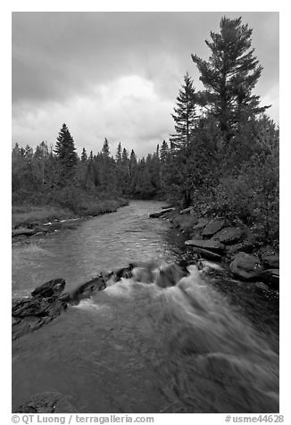 Allagash stream in stormy weather. Allagash Wilderness Waterway, Maine, USA (black and white)