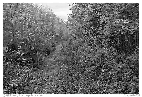 Overgrown road. Allagash Wilderness Waterway, Maine, USA (black and white)