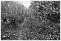 Overgrown road. Allagash Wilderness Waterway, Maine, USA ( black and white)