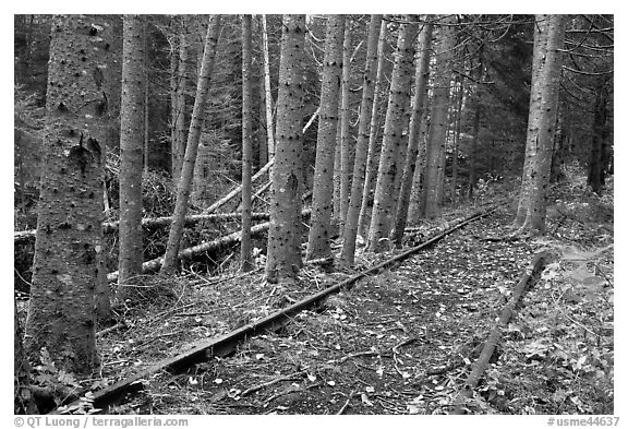 Eagle Lake and West Branch railroad tracks. Allagash Wilderness Waterway, Maine, USA (black and white)