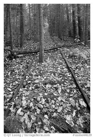 Abandonned railway tracks. Allagash Wilderness Waterway, Maine, USA (black and white)