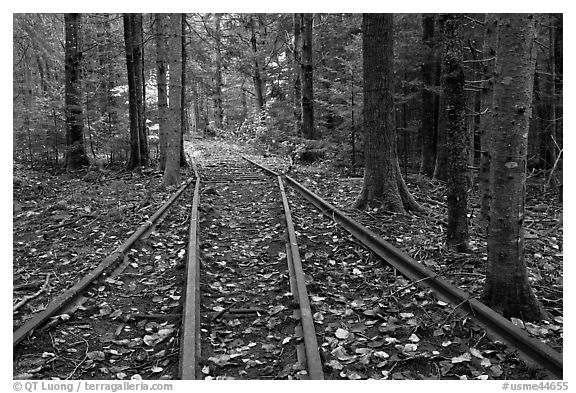 Forest with railroad tracks from bygone logging area. Allagash Wilderness Waterway, Maine, USA (black and white)