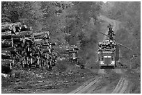 Log truck loaded on forestry road. Maine, USA ( black and white)