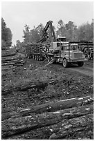 Forestry site with working log truck and log loader. Maine, USA ( black and white)