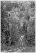 Meandering forestry road in autumn. Maine, USA ( black and white)