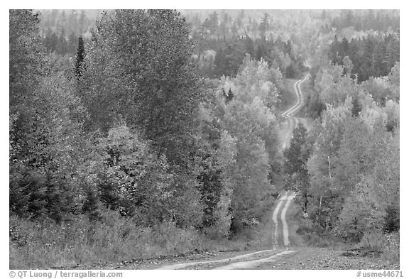 Dirt road through autumn forest. Maine, USA (black and white)