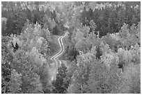 Northern forest in fall with narrow unimproved road. Maine, USA (black and white)