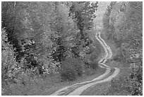Dirt road and curves in the fall. Maine, USA ( black and white)
