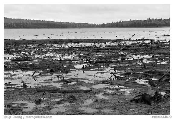 Dead trees and stumps, Round Pond. Allagash Wilderness Waterway, Maine, USA (black and white)