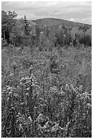 Clearing, forest in fall foliage, and hill. Maine, USA ( black and white)