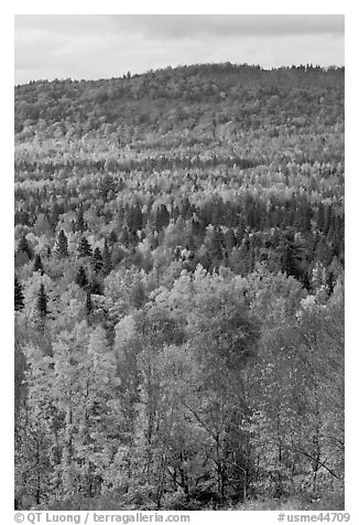 Northwoods landscape in autumn. Maine, USA (black and white)
