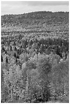 Northwoods landscape in autumn. Maine, USA ( black and white)