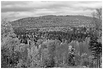 Northern forest landscape in autumn. Maine, USA ( black and white)