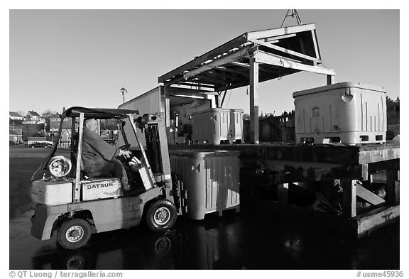 Man loading lobster crates in harbor. Stonington, Maine, USA (black and white)
