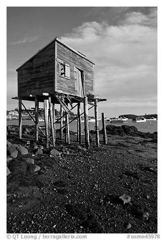 Shack on stills and harbor. Corea, Maine, USA (black and white)
