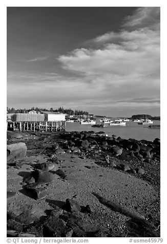 Lobster fishing fleet in harbor. Corea, Maine, USA (black and white)