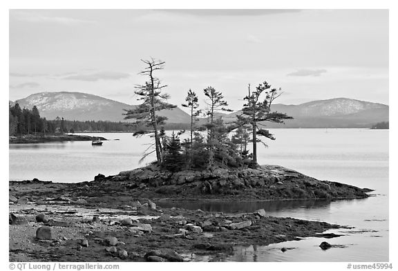 Islet with trees and low tide, and Frenchman Bay. Maine, USA (black and white)