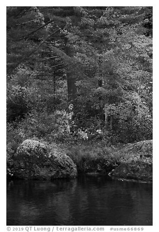 Rocks and trees in fall foliage reflected in East Branch Penobscot River. Katahdin Woods and Waters National Monument, Maine, USA (black and white)