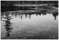 Beaver pond, Sandbank Stream. Katahdin Woods and Waters National Monument, Maine, USA ( black and white)