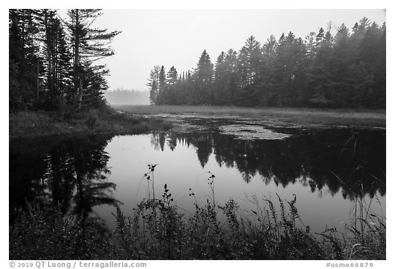 Pond in fog, Sandbank Stream. Katahdin Woods and Waters National Monument, Maine, USA (black and white)