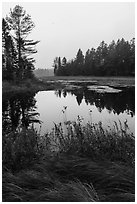 Grasses and pond, Sandbank Stream. Katahdin Woods and Waters National Monument, Maine, USA ( black and white)