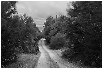 Katahdin Loop Road in autumn. Katahdin Woods and Waters National Monument, Maine, USA ( black and white)