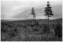 View from Loop Road Overlook. Katahdin Woods and Waters National Monument, Maine, USA ( black and white)