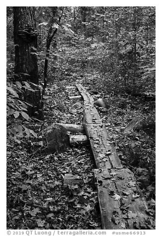 Boardwalk. Katahdin Woods and Waters National Monument, Maine, USA (black and white)