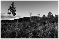 Trees and distant hill in autumn. Katahdin Woods and Waters National Monument, Maine, USA ( black and white)