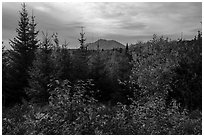 First view of Katahdin in autumn. Katahdin Woods and Waters National Monument, Maine, USA ( black and white)