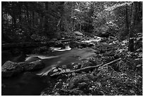 Hardwood forest and Katahdin Brook in autunm. Katahdin Woods and Waters National Monument, Maine, USA ( black and white)