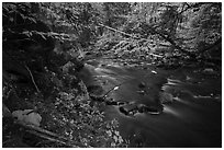 Katahdin Brook in autunm. Katahdin Woods and Waters National Monument, Maine, USA ( black and white)