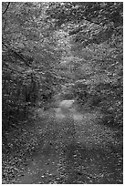 Road in autumn forest. Katahdin Woods and Waters National Monument, Maine, USA ( black and white)