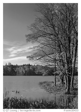 Lake with red maple in fall colors, Hiawatha National Forest. USA (black and white)