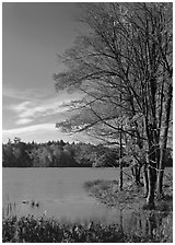 Lake with red maple in fall colors, Hiawatha National Forest. Upper Michigan Peninsula, USA ( black and white)