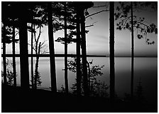 Trees and sunset, Lake Superior. Upper Michigan Peninsula, USA (black and white)