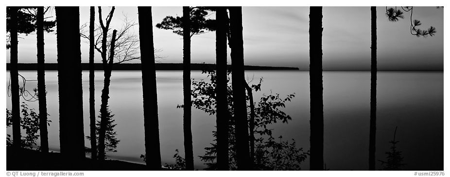 Sunset lakescape through trees, Lake Superior. Upper Michigan Peninsula, USA (black and white)