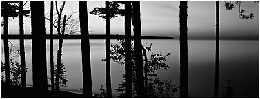 Sunset lakescape through trees, Lake Superior. Upper Michigan Peninsula, USA (Panoramic black and white)
