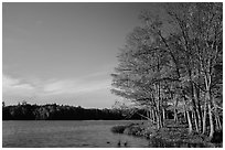 Lake with red maple in fall colors, Hiawatha National Forest. Upper Michigan Peninsula, USA (black and white)