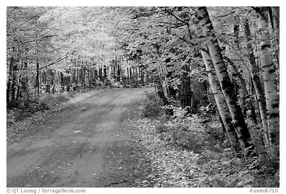 Rural road with fall colors, Hiawatha National Forest. Upper Michigan Peninsula, USA (black and white)