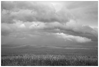 Storm clouds over field. North Dakota, USA (black and white)