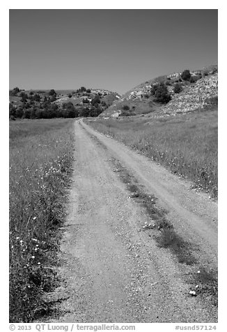 Narrow gravel road with wildflowers. North Dakota, USA (black and white)