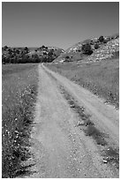 Narrow gravel road with wildflowers. North Dakota, USA ( black and white)