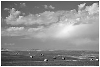 Field of grasses with hay rolls and big sky. North Dakota, USA ( black and white)