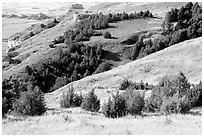 Trees and grasses. Scotts Bluff National Monument. South Dakota, USA ( black and white)